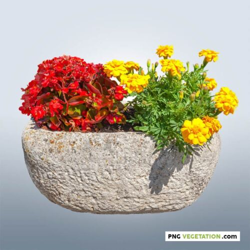 png potted flowers