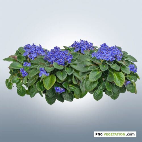 Cutout african violet