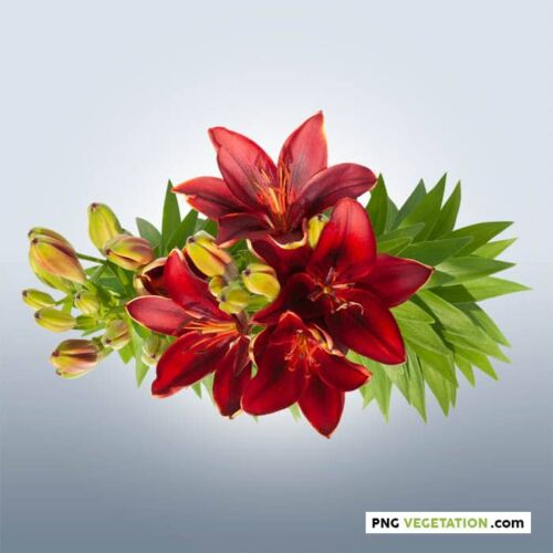 png bouquet of lilies