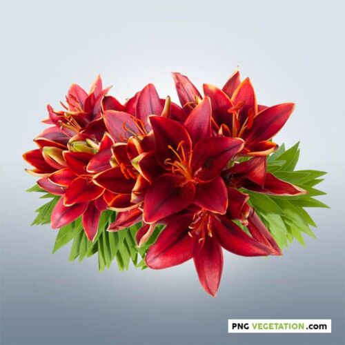 cutout red lilies