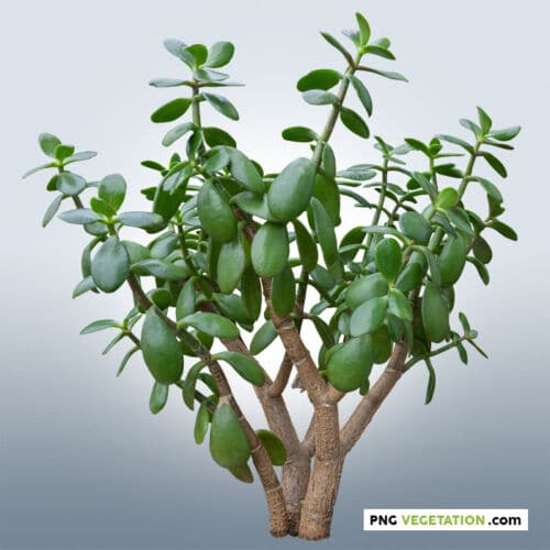 cut out tropical plant