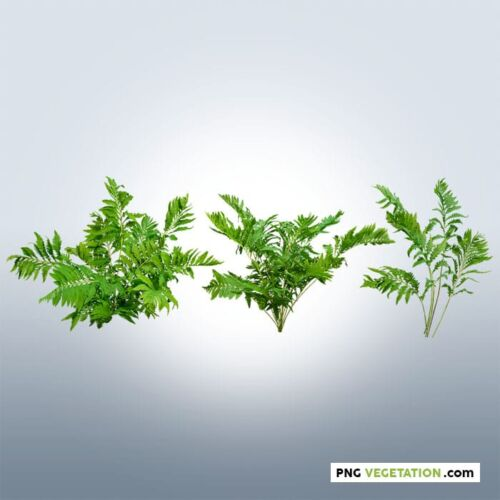 png plant fern in summer