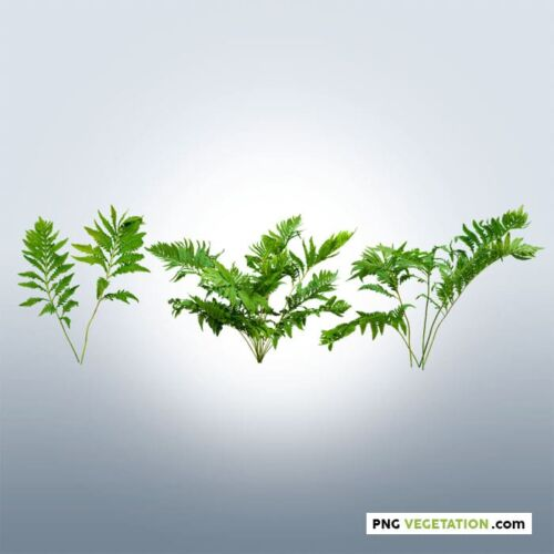 cut out plant fern
