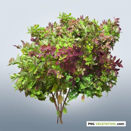 Colorful cut out foliage