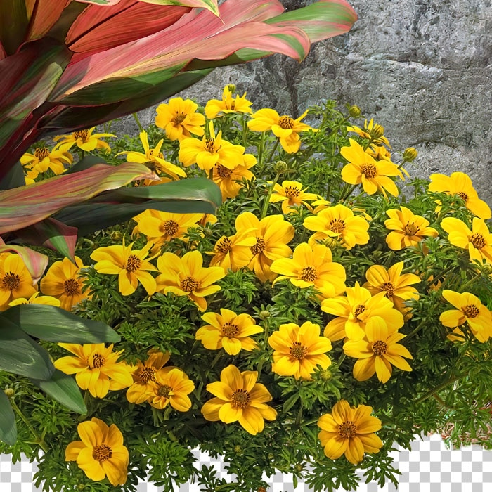 cutout flowers of flower bed