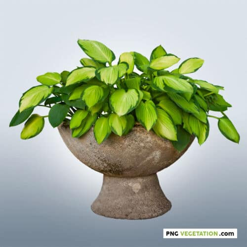 PNG potted plant