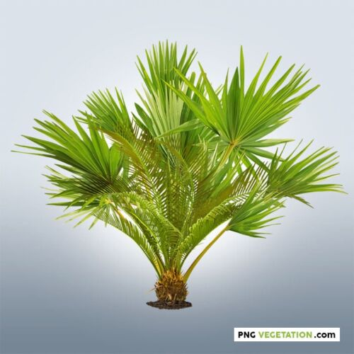 Cutout Tropical Plant