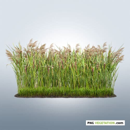 cutout reed grass