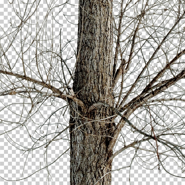 trunk of cutout bare tree