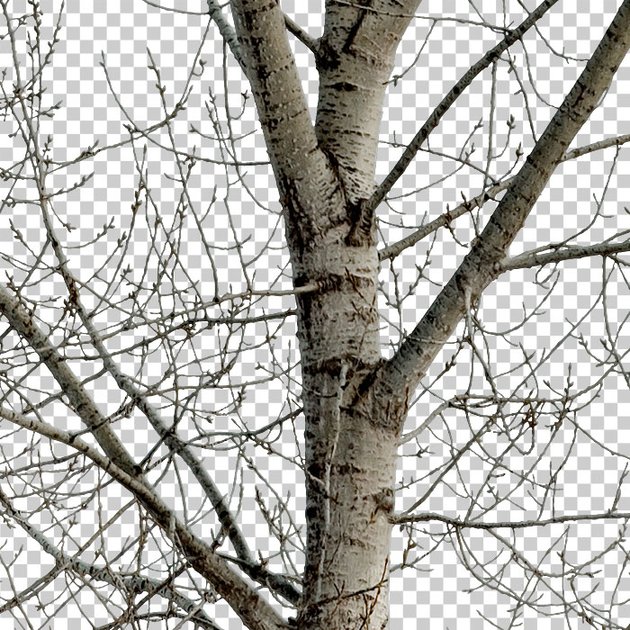 detail of cutout tree