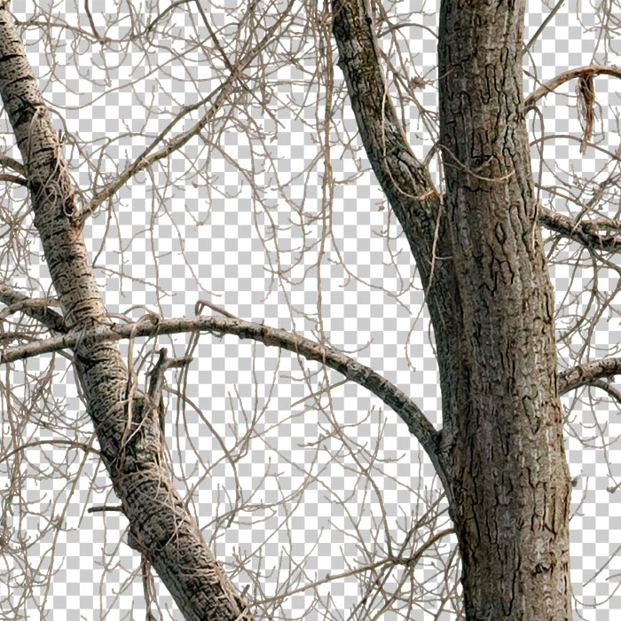 detail of cutout bare tree