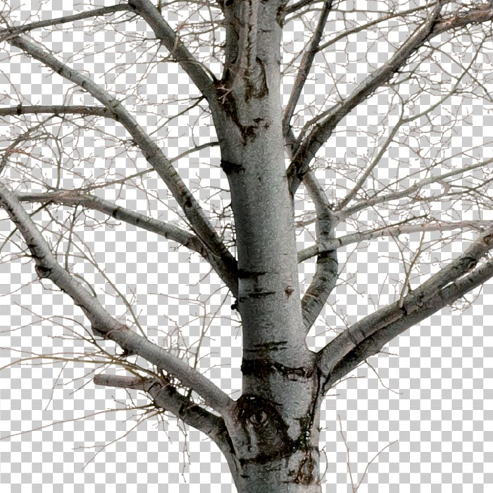 png branches in winter