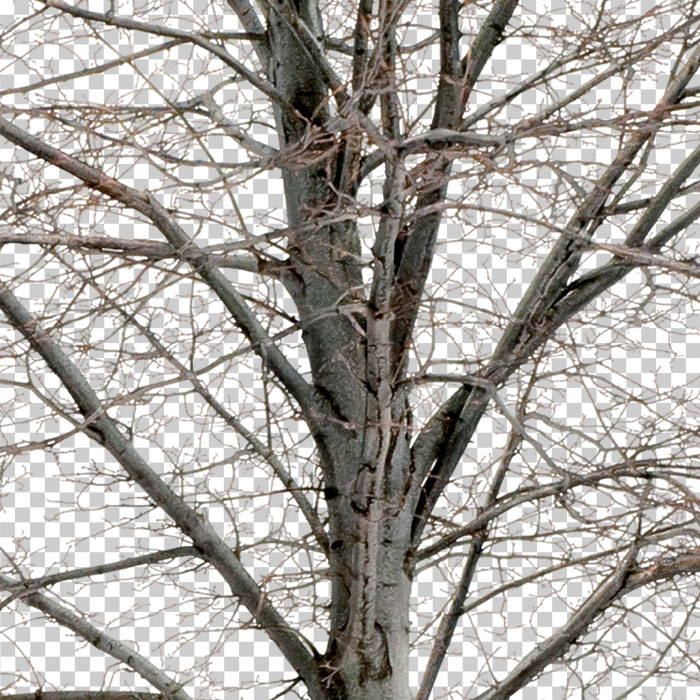 detail of png bare tree in winter