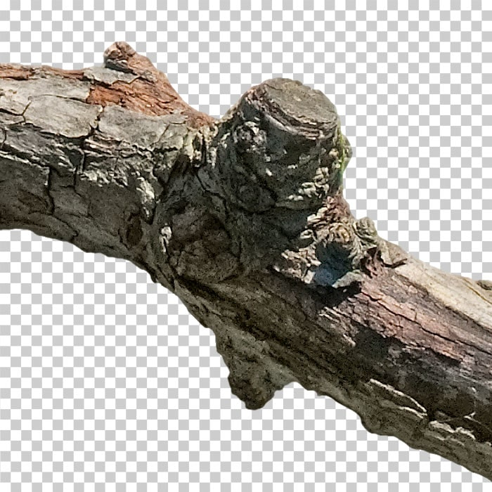 detail of cutout branch