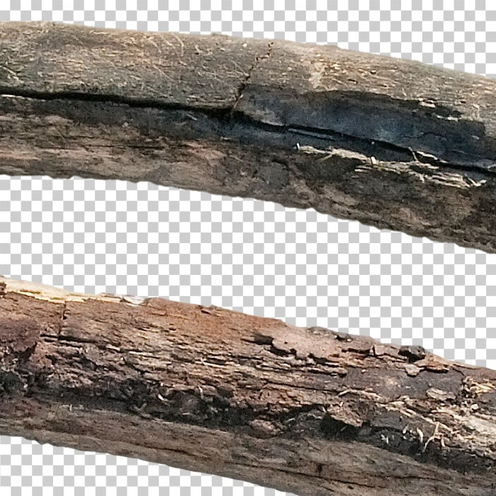 detail of cutout dry branch