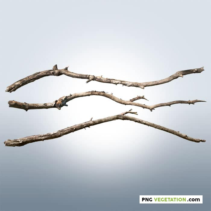 cut out of dead branches