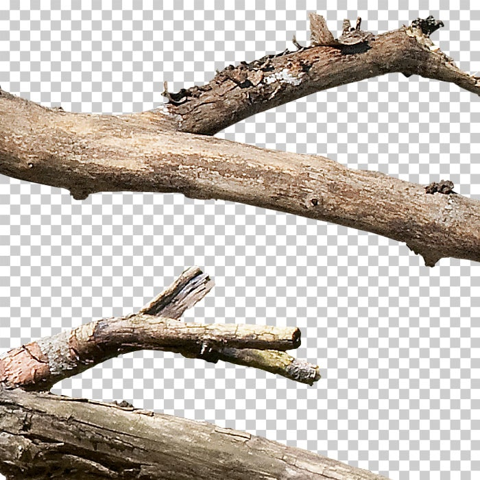 detail of cutout branches