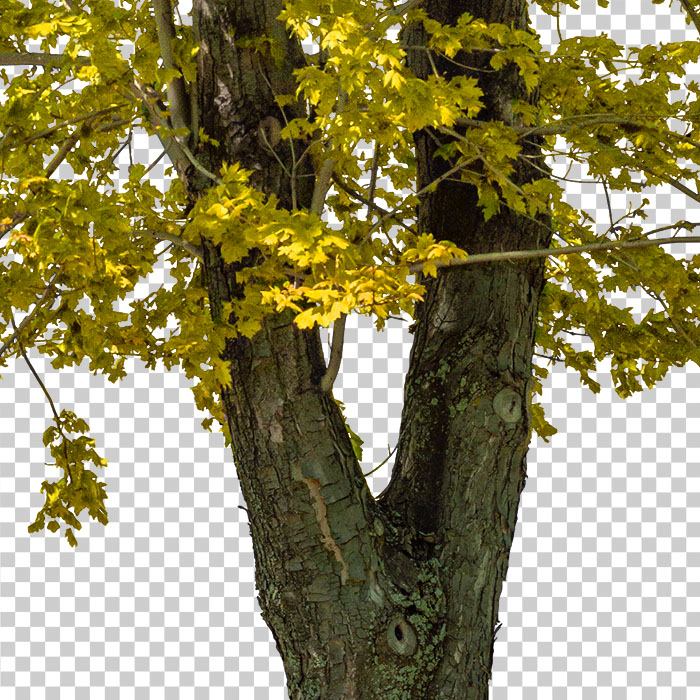 detail of cut out tree in fall