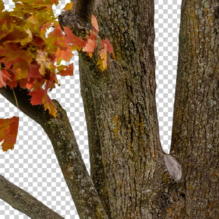 detail of cut out tree in autumn