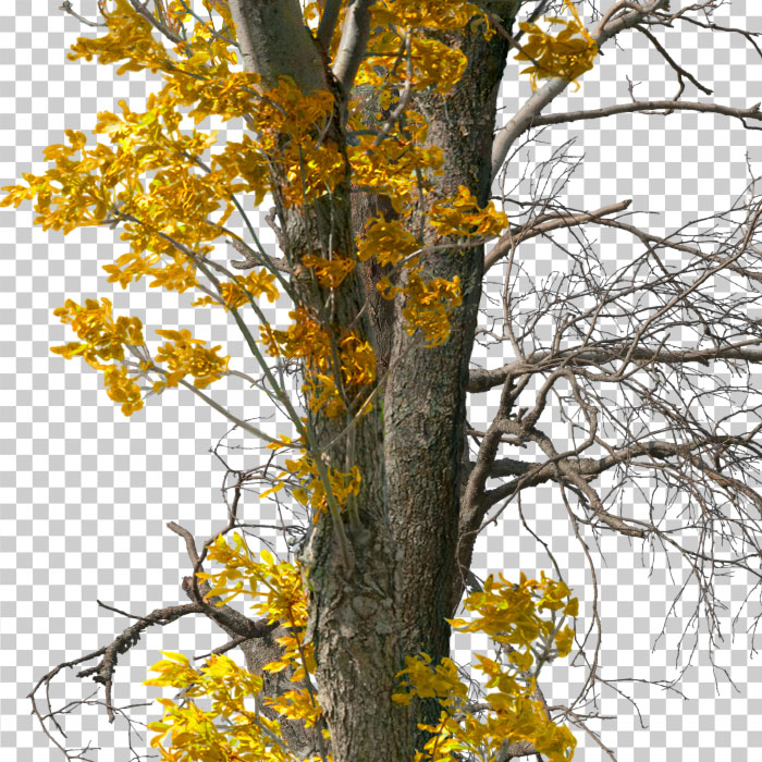 detail of cutout tree. Yellow foliage in fall