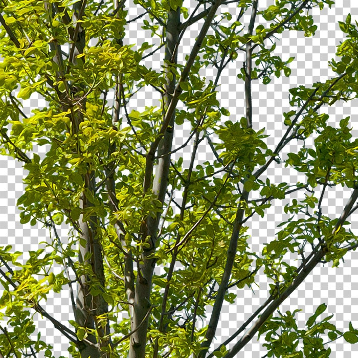 detail of cutout branches. cutout green tree