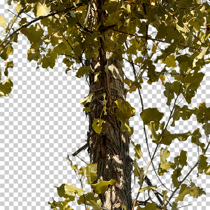 cut out leaves. png tree in autumn