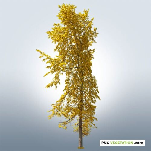 png yellow tree. Deciduous tree