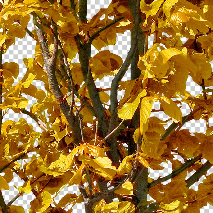 detail of cut-out tree with orange leaves in autumn