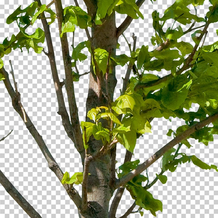detail of png tree with green leaves