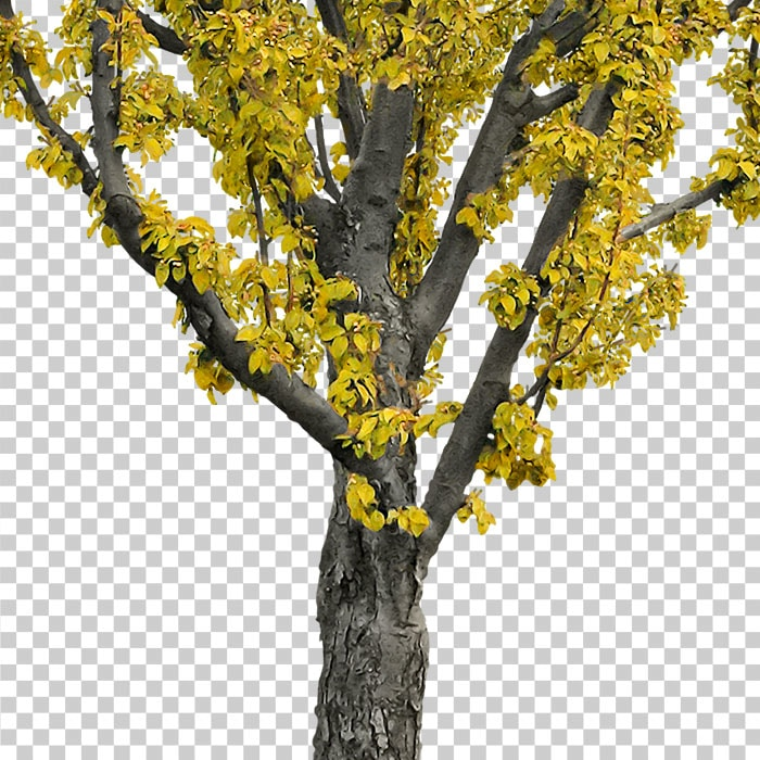 detail of yellow tree in autumn