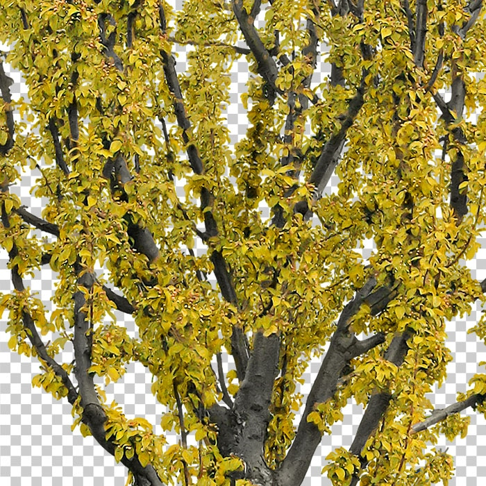 detail of cut out yellow tree in autumn