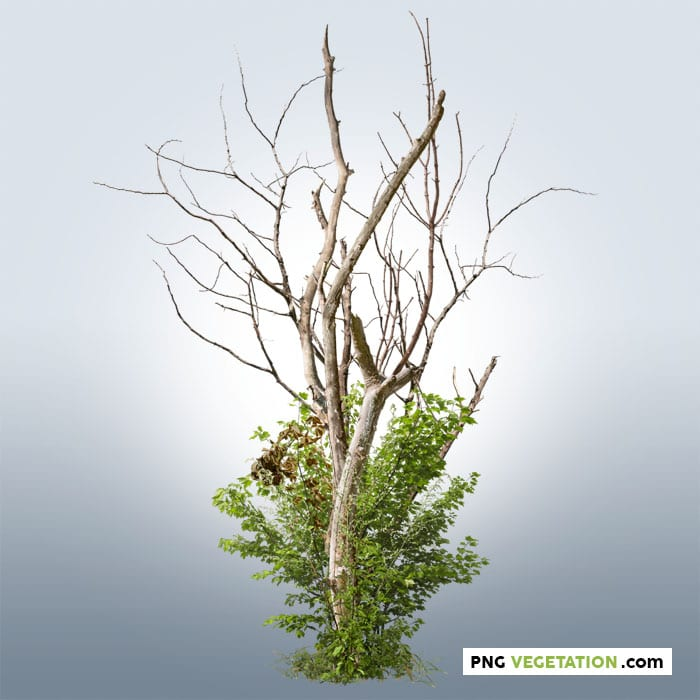 png dead tree with green foliage