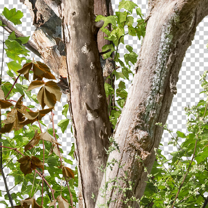detail of cutout dead tree with green leaves
