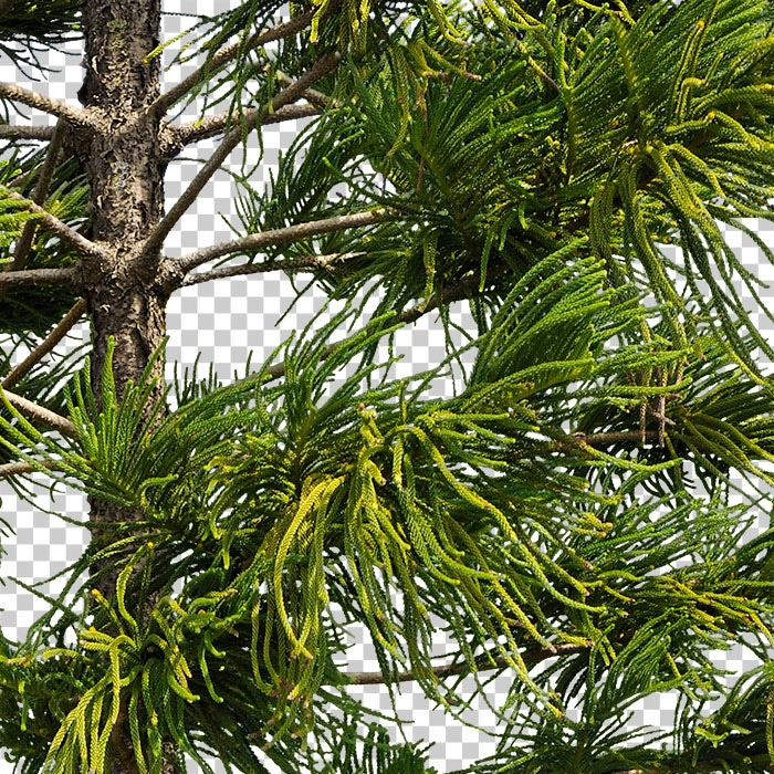 detail of cut out conifer