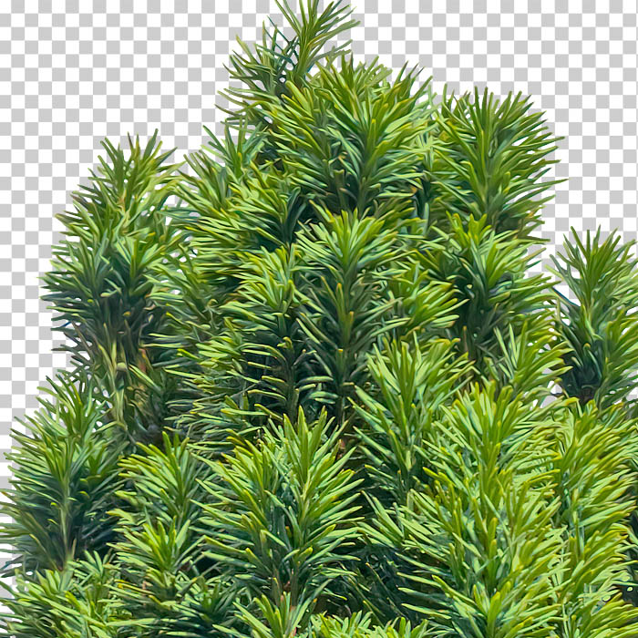 detail of cutout conifer