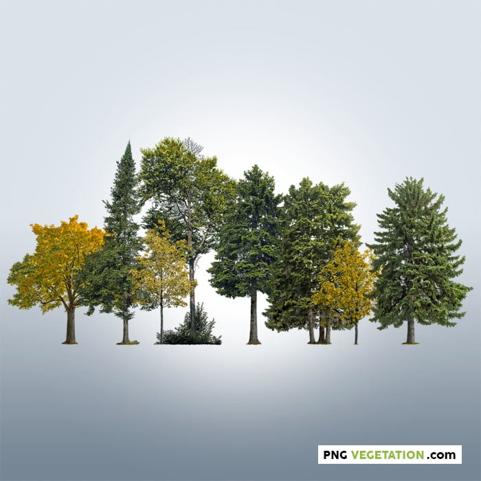 Cutout trees. Deciduous and coniferous trees forest
