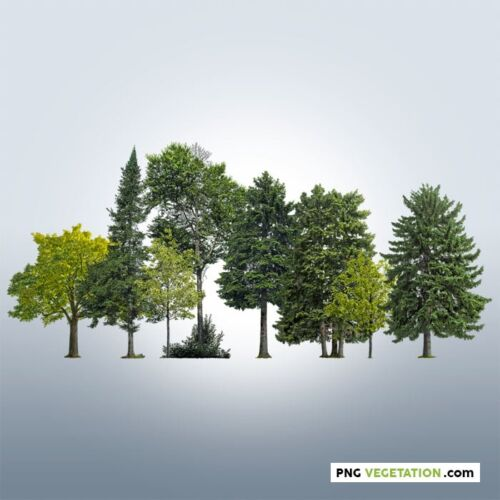Cut out trees forest. Deciduous and coniferous forest in summer