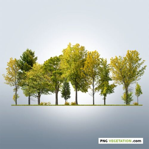Image of cutout trees. Deciduous forest in autumn