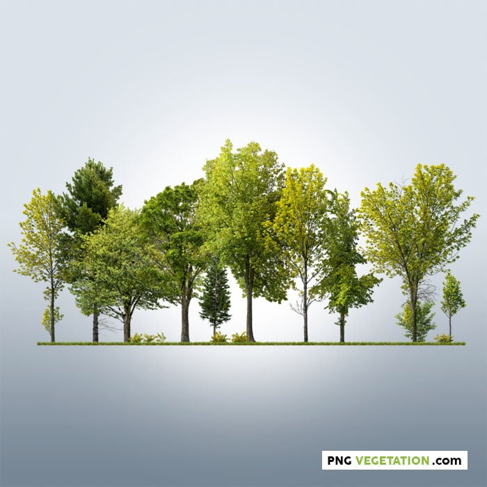 cutout trees. Deciduous green forest