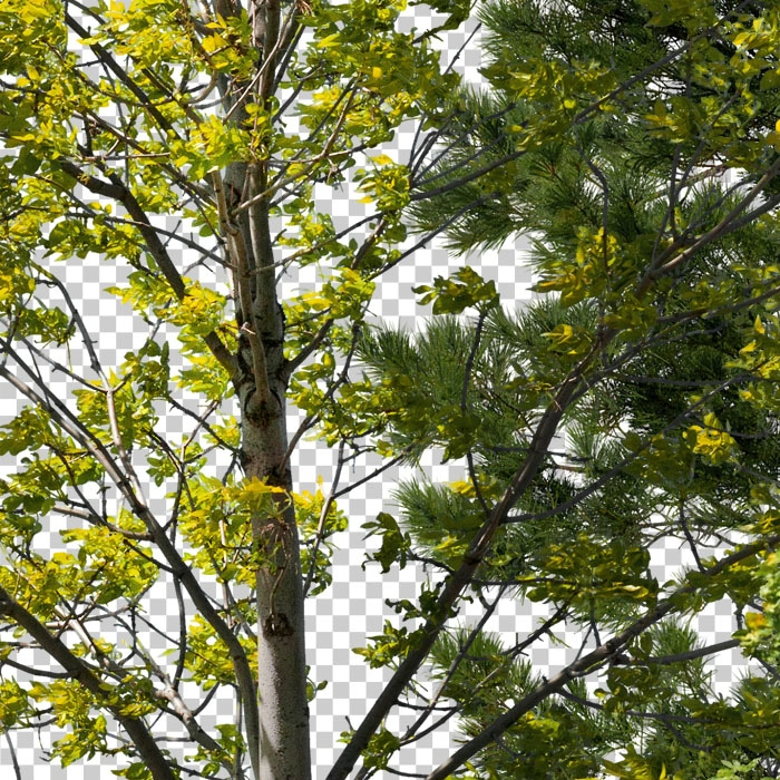 detail of cutout trees. Deciduous forest in summer