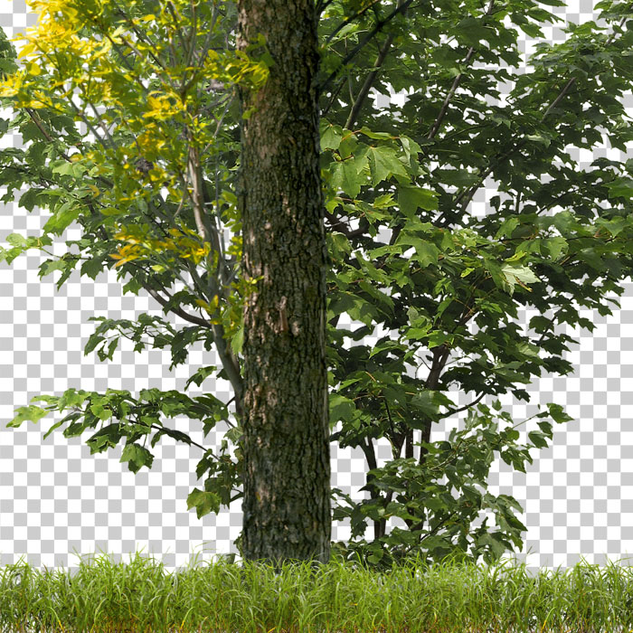 detail of cutout trees. png forest in summer