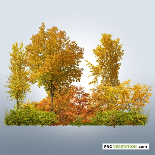 cutout forest. Deciduous trees in autumn