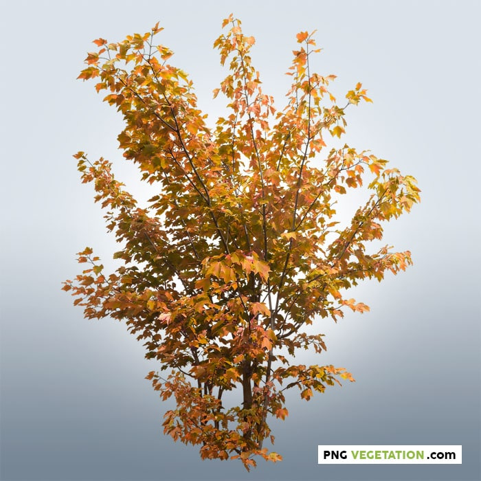 Cutout shrub in autumn