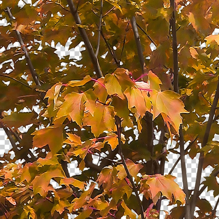 detail of orange shrub in autumn