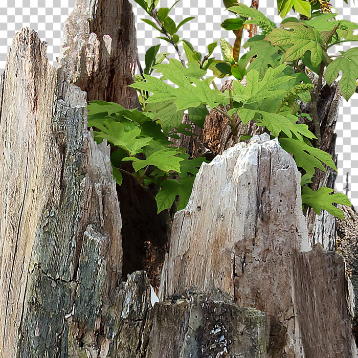Detail of cutout tree stump with green foliage