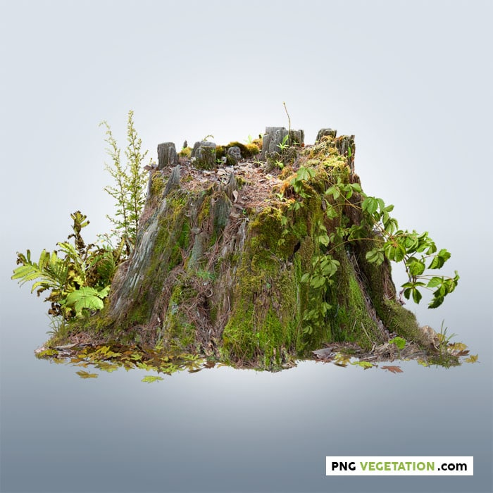 cut out tree stump covered with moos and green foliage