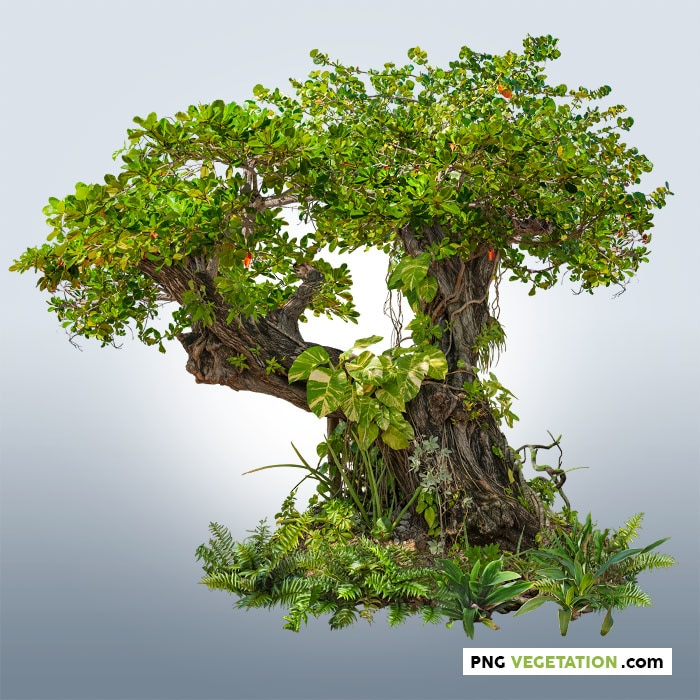 Cut out tropical tree. Old trunk covered by tropical vegetation