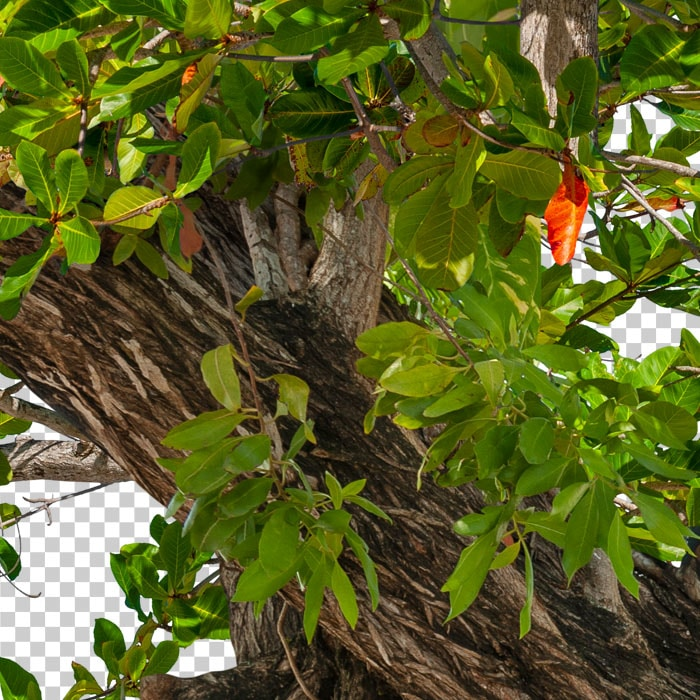 Detail of cutout tropical green tree