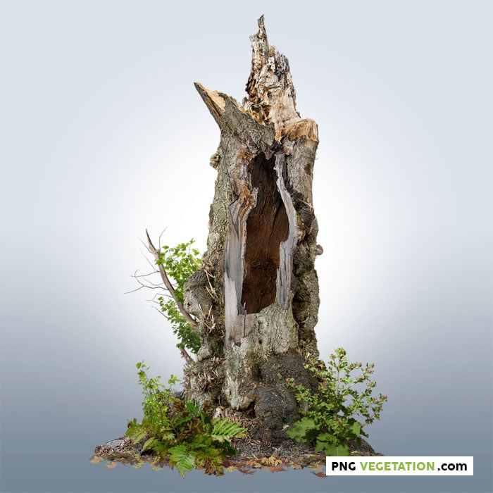 PNG hollow tree with green foliage