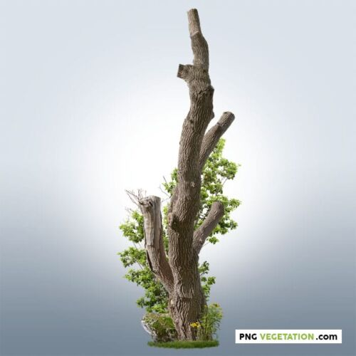 Cutout trimmed tree with green foliage